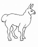 Llama Coloring Lama Animali Deserto Printable Kolorowanki Disegni Dzieci Dla Colorare Malvorlagen Simple Immagine Animal Coloratutto Colora Freeprintablecoloringpages Disegno Stampa sketch template
