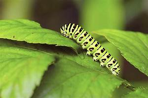 How To Protect Your Flowers From Caterpillar Pests