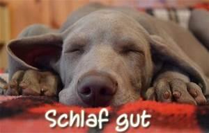 Schlaf Gut Bilder Kostenlos : gute nacht und schlaf gut whatsapp gr e ~ A.2002-acura-tl-radio.info Haus und Dekorationen