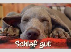 Gute Nacht und Schlaf Gut WhatsApp Grüße