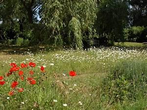 Garten Im Mai : g stezimmer weidenbaum wildhecke niedersachsen l neburger heide wendland l bbow frau ~ Markanthonyermac.com Haus und Dekorationen