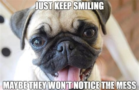 Keep Smiling Meme - 30 funny pug meme images that make you laugh picsmine