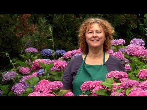 baum stecklinge ziehen der gr 252 ne tipp hortensien aus stecklingen vermehren garten garden flowers und garten