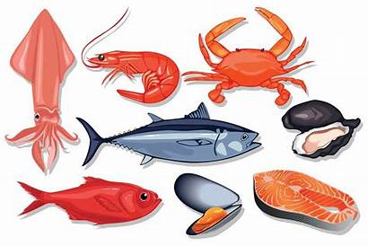 Seafood Vector Types Fish Different Illustration Kind