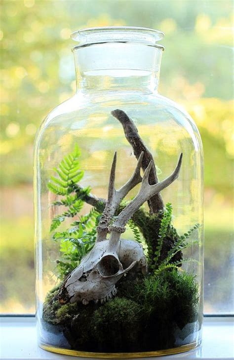 weekend project alert  diy terrariums  inspire