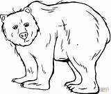 Grizzly Bear Coloring Bears Template Printable Templates Sheets Animal Colouring Sheet Simple Animals Supercoloring Tattoo California Results sketch template