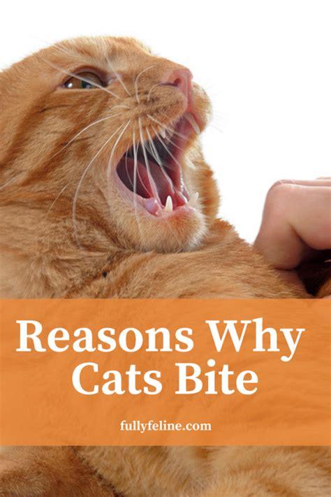 cat behavior  cats bite