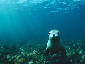 Love U Wallpapers: sea lion wallpaper