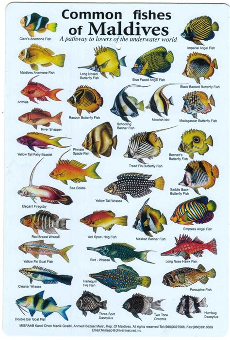 common fish  maldives fish chart sea fish types  fish
