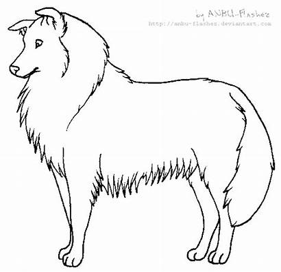 Lineart Collie Rough Coloring Anbu Flashez Pages