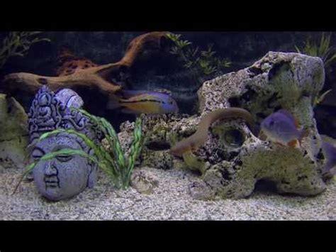 poisson aquarium eau douce aquarium tank 850 litre 230 gallon cichlides am 233 ricain doovi