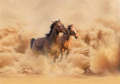 500px Popular Week Horse Graceful Iso Delight