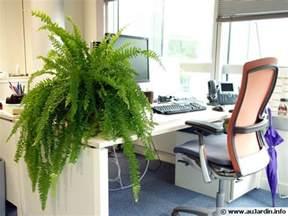 Plante Pour Bureaux by Des Plantes Pour Le Bureau
