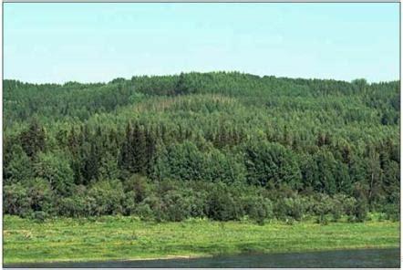 Meži Latvijā un pasaulē — teorija. Dabaszinības, 4. klase.