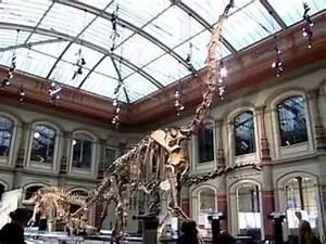 Reiseführer Für Berlin : museum f r naturkunde berlin youtube ~ Jslefanu.com Haus und Dekorationen