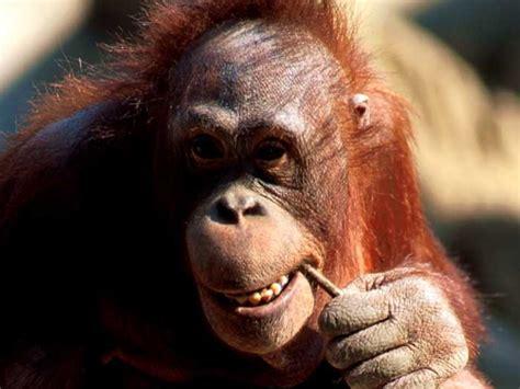 imagenes de monos imagenes