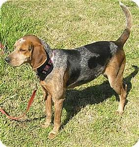 Rustie | Adopted Dog | Edisto Island, SC | Bluetick ...