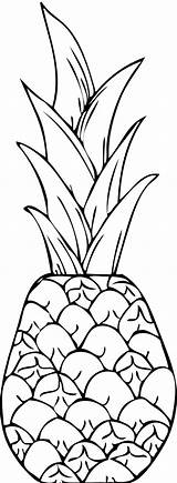 Pineapple Drawing Coloring Exotic Cayenne Clip Smooth Line Watercolor Pages Easy Getdrawings sketch template