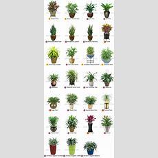Best 25+ Tropical Plants Ideas On Pinterest  Green Leaves