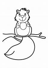Squirrel Coloring Pages Squirrels Printable Cute Cartoon Clipart Colour Animal Library Clip Popular sketch template