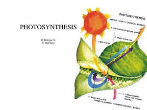 Simple Photosynthesis Process