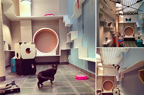 Aristide Hotel For Urban Cats Brings Catification To Paris