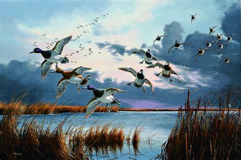 Duck hunting: A case of the bluebill blues - StarTribune.com