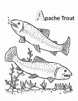Trout Coloring Pages Apache Brook Mating Getcolorings sketch template