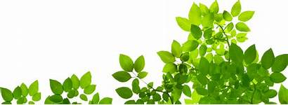 Natural Oil Leaves Essential Mom Vhv Rs