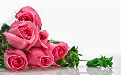wallpaper bunga mawar merah image collections