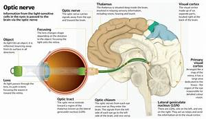 Science Of Vision  How Do Our Eyes Enable Us To See   U2013 How