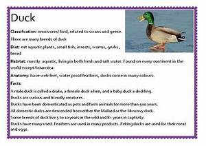 Farm Animals Information Cards. by Lambie's Learning Space ...