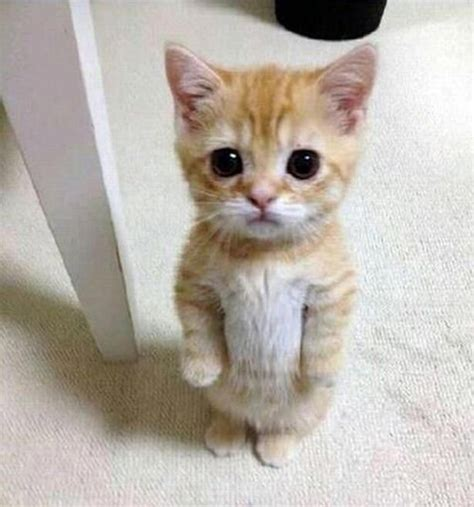 cute cats cat looks he comments