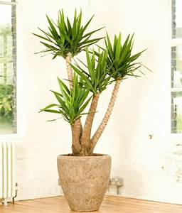 Yucca Palme Winterhart : pin auf garten ~ A.2002-acura-tl-radio.info Haus und Dekorationen