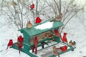 Cardinal Bird Winter Scenes