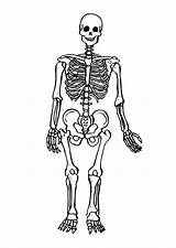 Skeleton Coloring Pages Human Printable sketch template