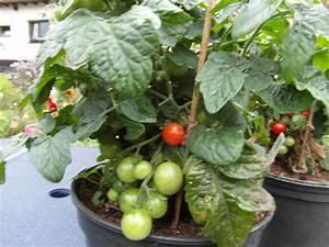 Tomaten Im Hochbeet : mahoni64 ~ Whattoseeinmadrid.com Haus und Dekorationen
