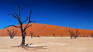 Desert, Tree, Sky, Hd, Wallpapers
