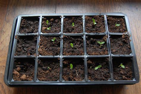 Garden Modules by How To Create A Cutting Garden Step Three Higgledy Garden
