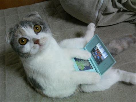 Funny Cats Cat Playing Video Games
