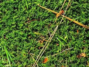 Désherbant Naturel Pour 600m2 : d sherbant naturel ooreka ~ Nature-et-papiers.com Idées de Décoration
