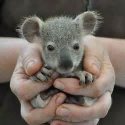 Baby Animals (@BBAnimals) | Twitter