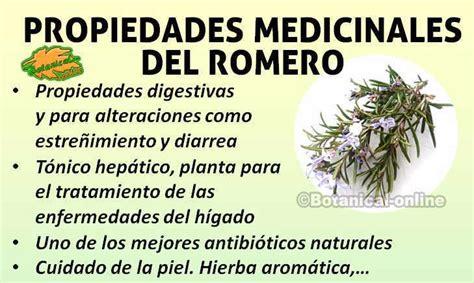 el organo  sus propiedades buena salud romero planta propiedades