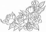 Peony Coloring Printable Pages sketch template
