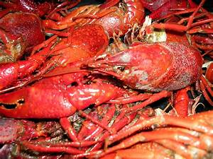 File:Louisiana crawfish.jpg - Wikimedia Commons
