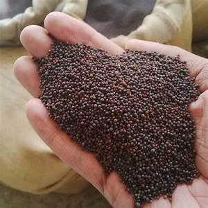 Australian Seed - MUSTARD Black
