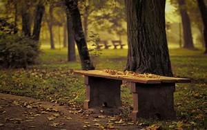 bench park fallen leaves autumn tree effect focus blur HD ...