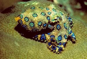 los 10 animales mas venenosos del mundo - Taringa!