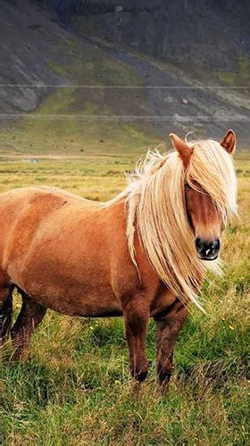 pony fuer android kostenlos herunterladen  wallpaper
