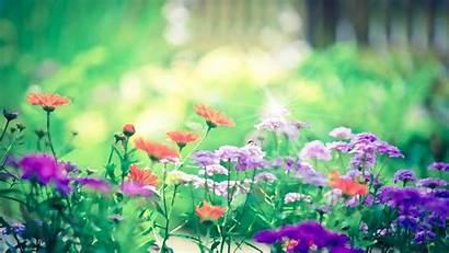 Screensavers Screensaver Flower Desktop Windows Garden Screen